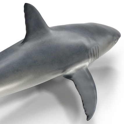 Caribbean Reef Shark. Render 28