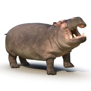 Hippopotamus Rigged for Cinema 4D. Preview 4