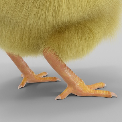 Chick with Fur. Render 15