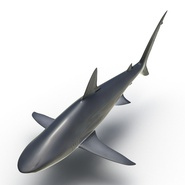Dusky Shark Rigged for Maya. Preview 6