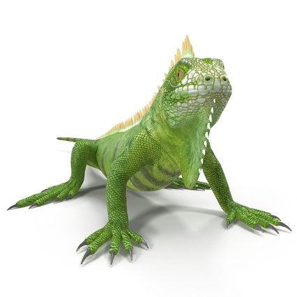 Green Iguana Rigged for Cinema 4D. Render 18