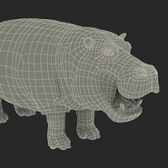 Hippopotamus Rigged for Cinema 4D. Preview 37