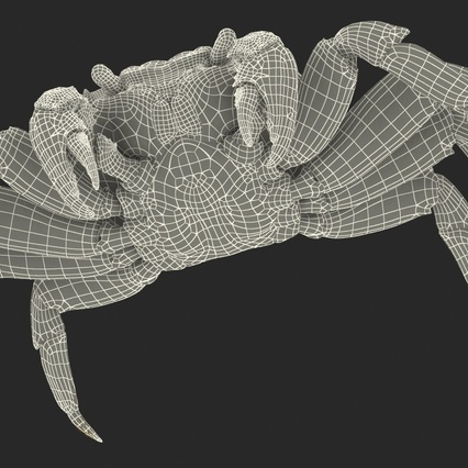 Red Rock Crab Rigged for Maya. Render 32