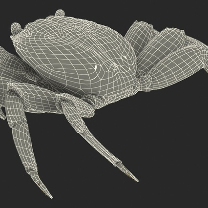 Red Rock Crab Rigged for Maya. Render 31