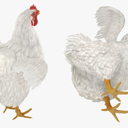 White Chicken. Render 9