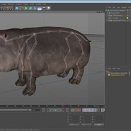 Hippopotamus Rigged for Cinema 4D. Preview 24