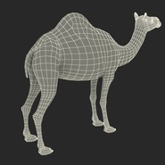 Camel Rigged for Cinema 4D. Preview 29