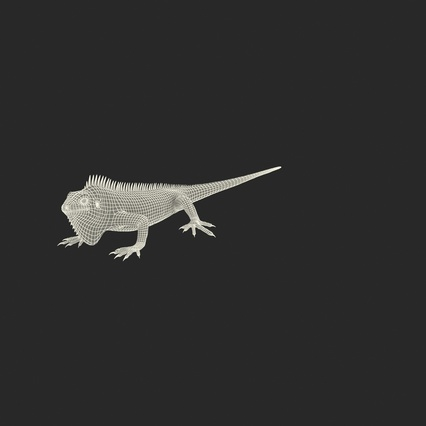 Green Iguana Rigged for Cinema 4D. Render 4