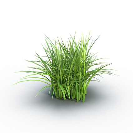 Grass Collection. Render 2