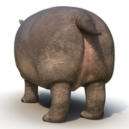 Hippopotamus Rigged for Cinema 4D. Preview 12