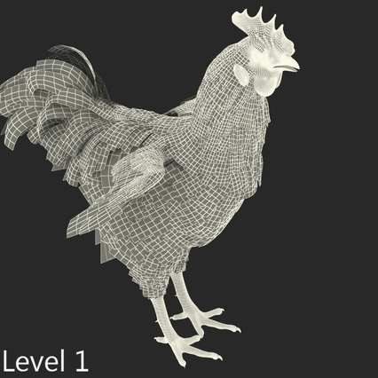 Brown Hen Rigged for Maya. Render 20
