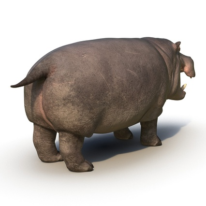 Hippopotamus Rigged for Cinema 4D. Render 8