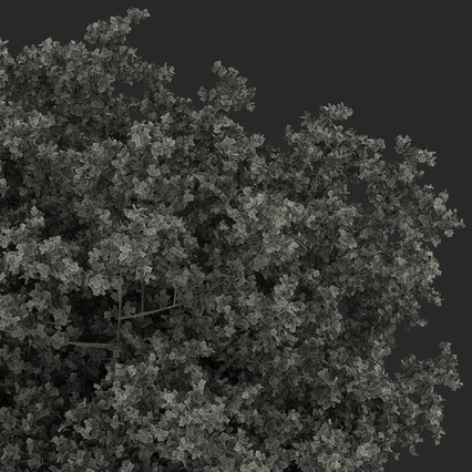 White Oak Tree Summer. Render 30