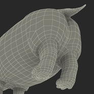 Hippopotamus Rigged for Cinema 4D. Preview 35