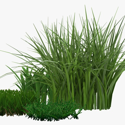 Grass Collection. Render 11