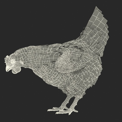 White Chicken Eating Pose. Render 4