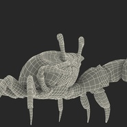 Fiddler Crab Fighting Pose with Fur. Preview 19