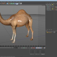 Camel Rigged for Cinema 4D. Preview 22