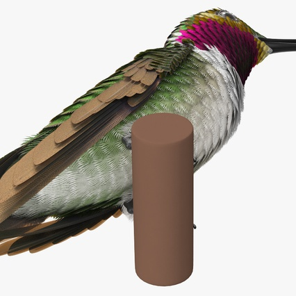 Broad Tailed Hummingbird Sitting on Branch. Render 10