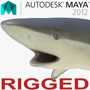 Grey Reef Shark Rigged for Maya