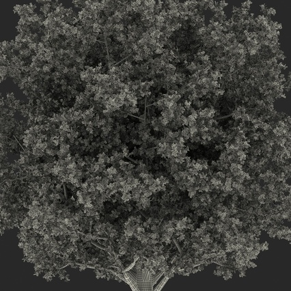 White Oak Tree Summer. Render 29