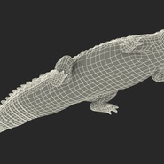 Crocodile Rigged for Maya. Preview 30
