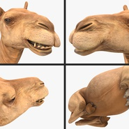 Camel Rigged for Cinema 4D. Preview 20