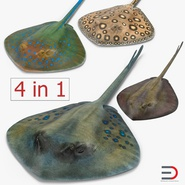 Stingray Collection