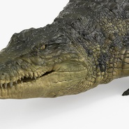 Crocodile Rigged for Maya. Preview 15