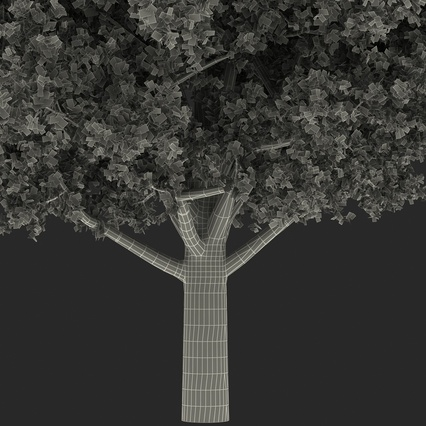White Oak Tree Summer. Render 26