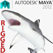 Blacktip Reef Shark Rigged for Maya