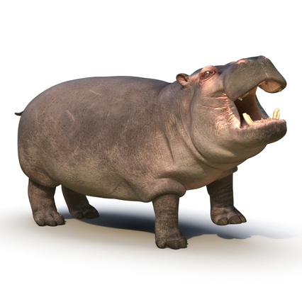 Hippopotamus Rigged for Cinema 4D. Render 4