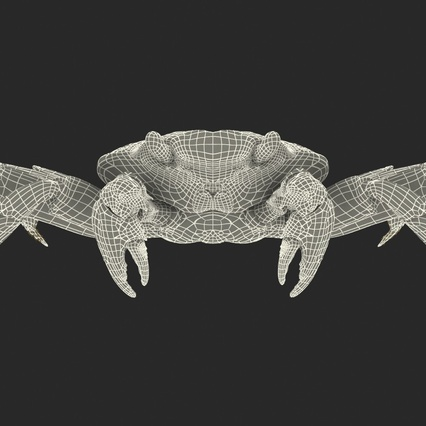 Red Rock Crab Rigged for Maya. Render 4