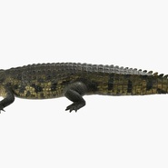Crocodile Rigged for Maya. Preview 2
