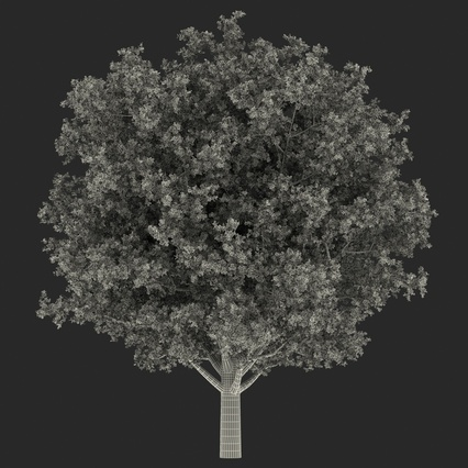 White Oak Tree Summer. Render 23