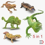 Rigged Lizards Collection