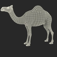 Camel Rigged for Cinema 4D. Preview 3