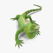 Green Iguana Rigged