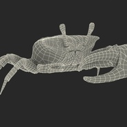 Fiddler Crab with Fur. Preview 4