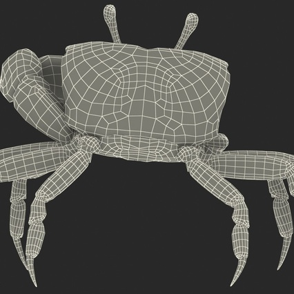 Fiddler Crab Standing Pose with Fur. Render 20