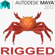 Red Rock Crab Rigged for Maya. Preview 1