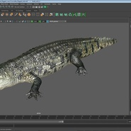 Crocodile Rigged for Maya. Preview 20