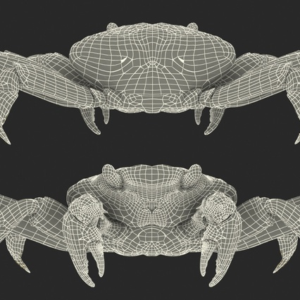 Red Rock Crab Rigged for Maya. Render 30
