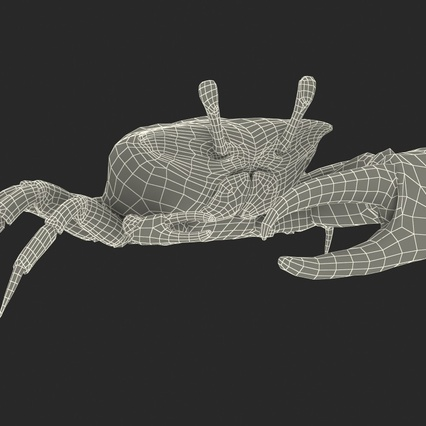 Fiddler Crab with Fur. Render 4