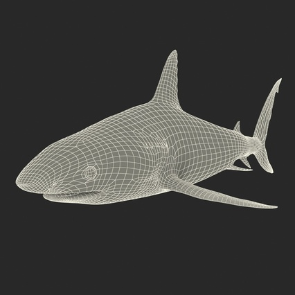 Caribbean Reef Shark. Render 42