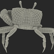 Fiddler Crab Standing Pose with Fur. Preview 20