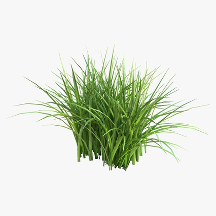 Grass Collection. Render 9