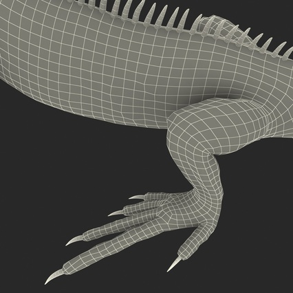 Green Iguana Rigged for Cinema 4D. Render 35
