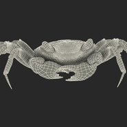 Vampire Crab Geosesarma Rigged with Fur. Preview 6