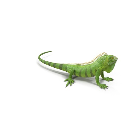 Green Iguana Rigged for Cinema 4D. Render 10